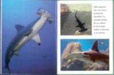 tiburones-9788499135359