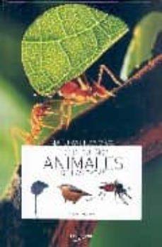 los pequeños animales de las casas-9788431534868